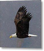 Bald Eagle Flight In Snow Metal Print