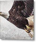 Bald Eagle Fly By Metal Print