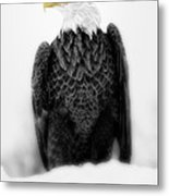 Bald Eagle II Metal Print