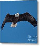 Bald Eagle In Flight 4 Metal Print