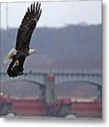 Bald Eagle Leaves With Fish At Lock And Dam 14 Metal Print