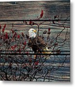 Bald Eagle On Barnwood Metal Print