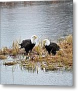 Bald Eagle Pair Metal Print