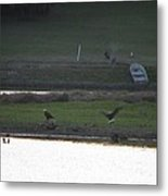Bald Eagle Pair With Turkey Strutting Metal Print