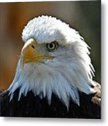 Bald Eagle Pose Metal Print