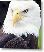 Bald Eagle - Power And Poise 04 Metal Print