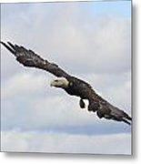 Bald Eagle Release 1 Metal Print
