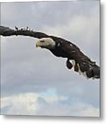 Bald Eagle Release 2 Metal Print