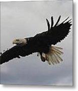 Bald Eagle Release 4 Metal Print