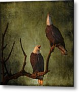 Bald Eagle Serenade Metal Print