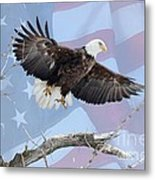 Bald Eagle Touch Of Pride Metal Print