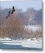 Bald Eagles At Providence Dam 1107 Metal Print