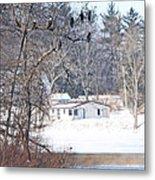 Bald Eagles In Tree In Grand Rapids Ohio 3996 Metal Print