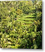 Bali Sayan Rice Terraces Metal Print