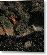 Ballestas Orange Crab 1 Metal Print