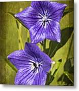 Balloon Flower Metal Print by Marcia Colelli