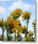Balsamroot Reaching For The Sky Metal Print by Cari Gesch