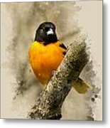 Baltimore Oriole Watercolor Art Metal Print
