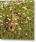 Bambi 2 Metal Print