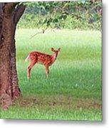 Bambi Days Metal Print