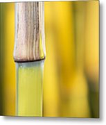 Bamboo Abstract Metal Print by Tim Gainey