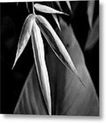 Bamboo And Banana Leaves Black And White Metal Print