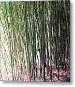 Bamboo By Roadsides Cherry Hill Roadside Greens            Metal Print