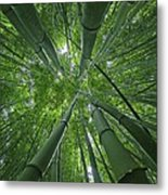 Bamboo Forest 1 Metal Print