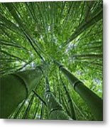 Bamboo Forest 2 Metal Print