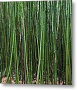 Bamboo Forest 3 Metal Print