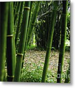 Bamboo Forest Metal Print by Andres LaBrada