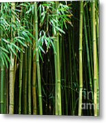 Bamboo Forest Maui Metal Print