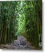 Bamboo Forest Trail Hana Maui Metal Print by Dustin K Ryan