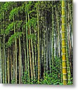 Bamboo Hill Metal Print