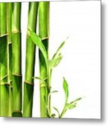 Bamboo Shoots Stacked Side By Side Metal Print by Sandra Cunningham