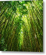 Bamboo Sky - The Magical And Mysterious Bamboo Forest Of Maui. Metal Print