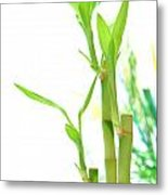 Bamboo Stems And Leaves Metal Print