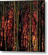 Bamboo Sunset Metal Print by Sharon Costa
