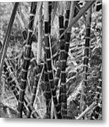 Bamboo-waimea Arboretum  Metal Print