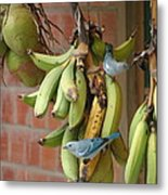 Banana Birds Metal Print