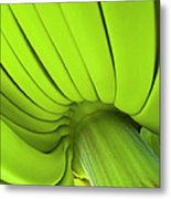 Banana Bunch Metal Print