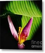 Banana Flower Metal Print