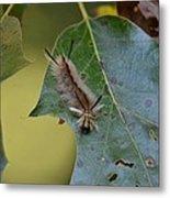 Banded Tussock Moth Caterpillar Metal Print