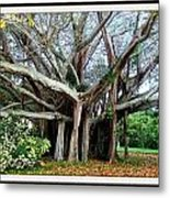 Banyon Tree Metal Print