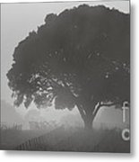 Barbara's Tree Metal Print