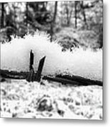 Barbed Wire In Snow Metal Print