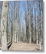 Bare Forest Metal Print