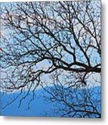 Bare Tree Against Blue Sky Metal Print