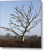 Bare Tree In Forest Metal Print