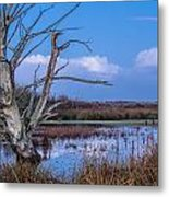 Bare Tree In Marsh Metal Print